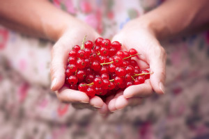 delicious_red_berries